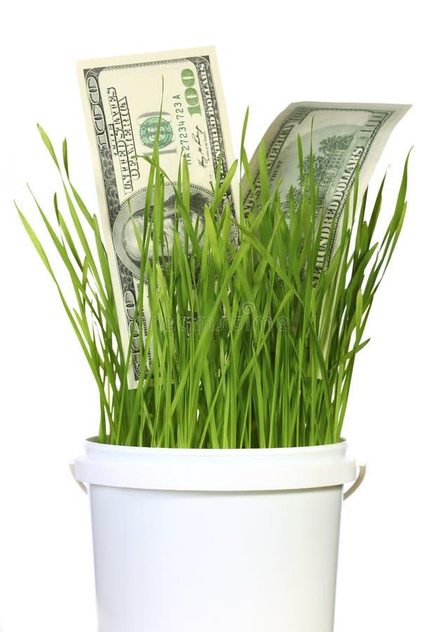 Dollari in erba immagini stock libere da diritti