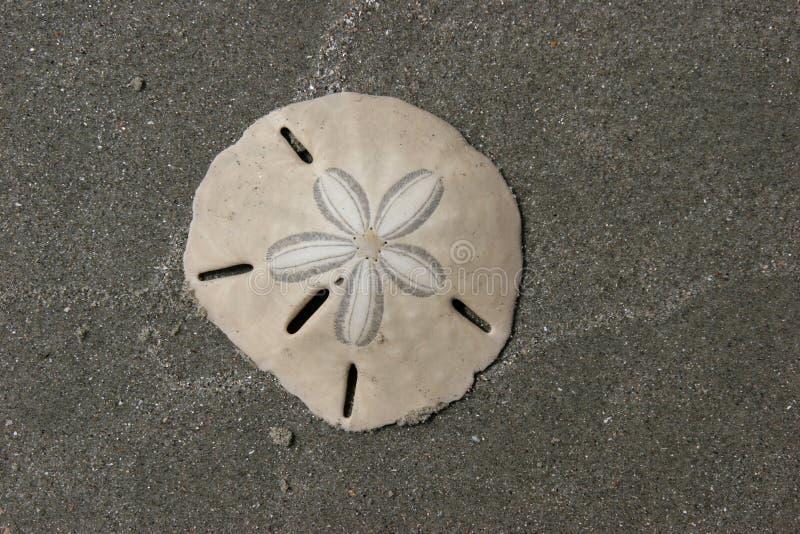 Dollaro di sabbia fotografia stock