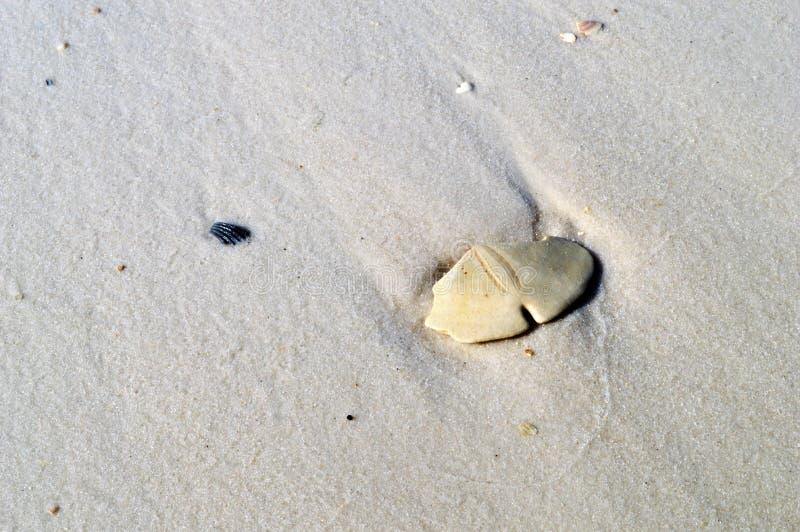 Dollaro di sabbia sulla spiaggia fotografia stock
