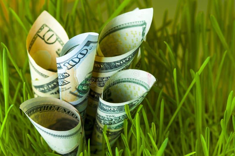 Dollarräkningar som växer i grönt gräs arkivfoto