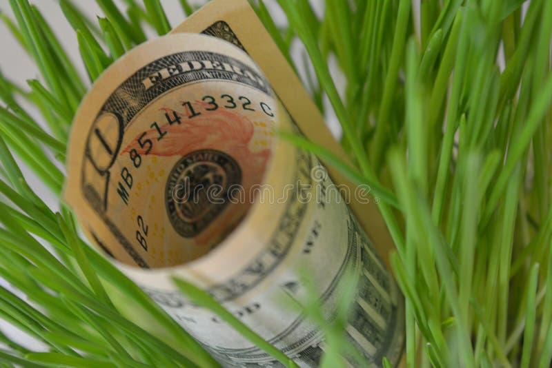 Dollars d'argent à l'arrière-plan d'herbe verte photographie stock