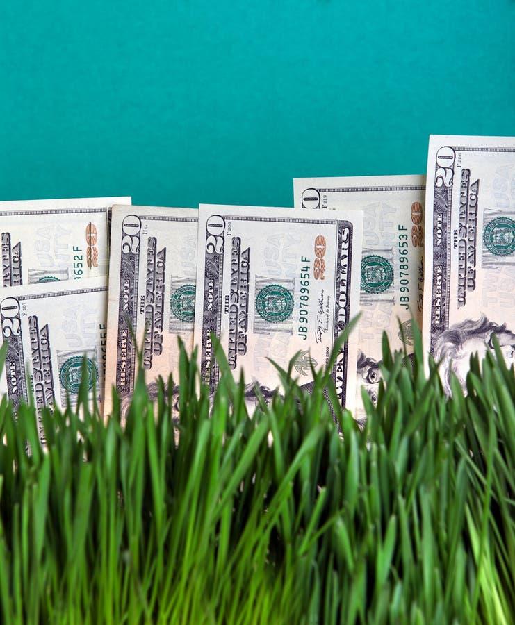 Dollars dans l'herbe image stock