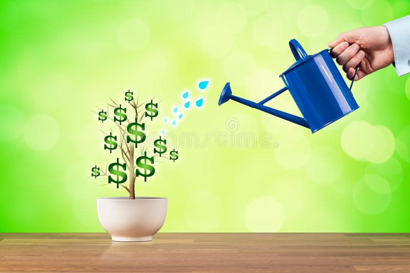 Dollars income growth. Concept. Income growth represented by plant watered by CFO, investor, stockholder and similar royalty free stock photo