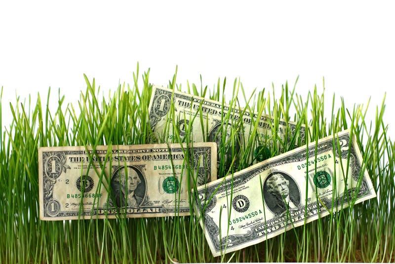 Dollars op ontsproten tarwe om winsten te verhogen Concept zaken en financiën stock foto
