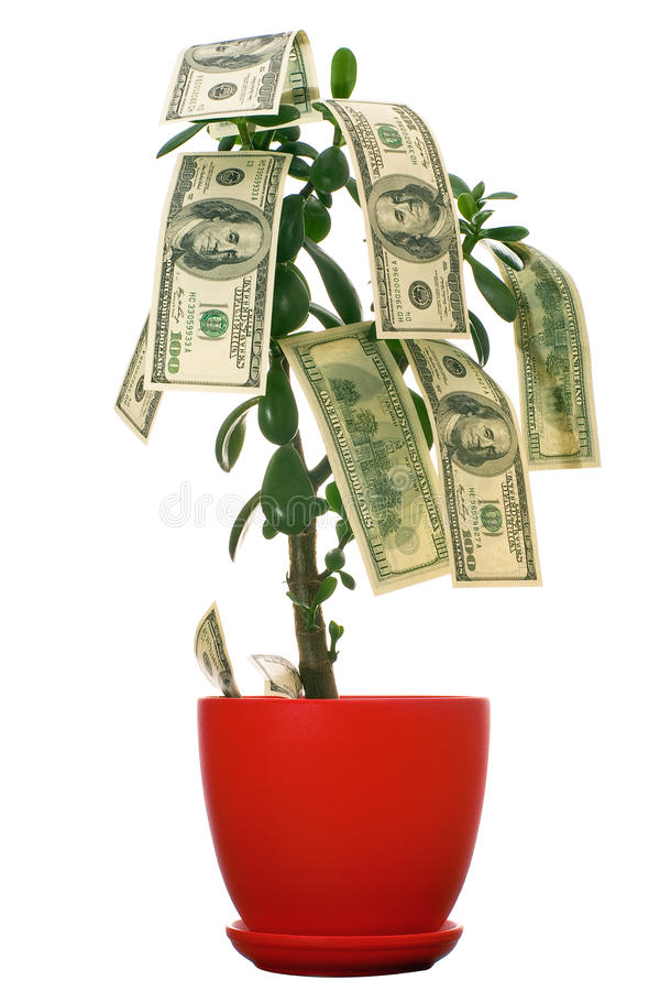 Download Dollars on the tree stock photo. Image of floriculture - 13332344