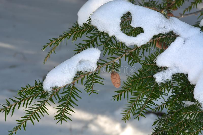 Download Dollekerveltak Met Kegels En Sneeuw Stock Afbeelding - Afbeelding bestaande uit installaties, hout: 107706965