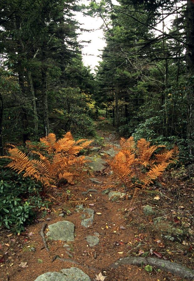 dolly sceniczny chrzanić jesieni zdjęcia royalty free