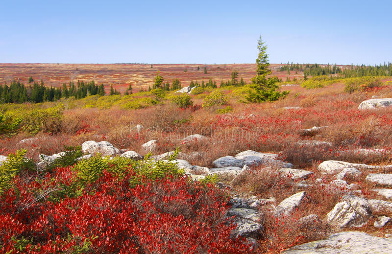 Dolly Sods lizenzfreie stockbilder