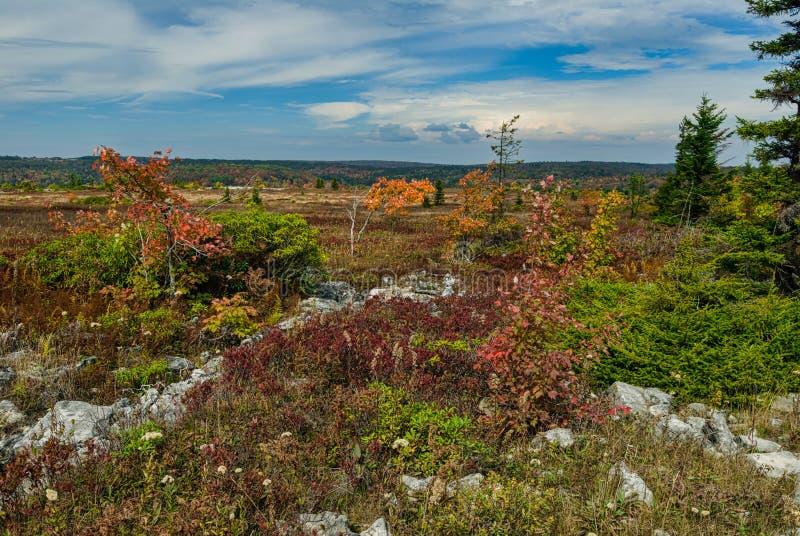 Dolly Sods, Autunno, Virginia Occidentale fotografia stock