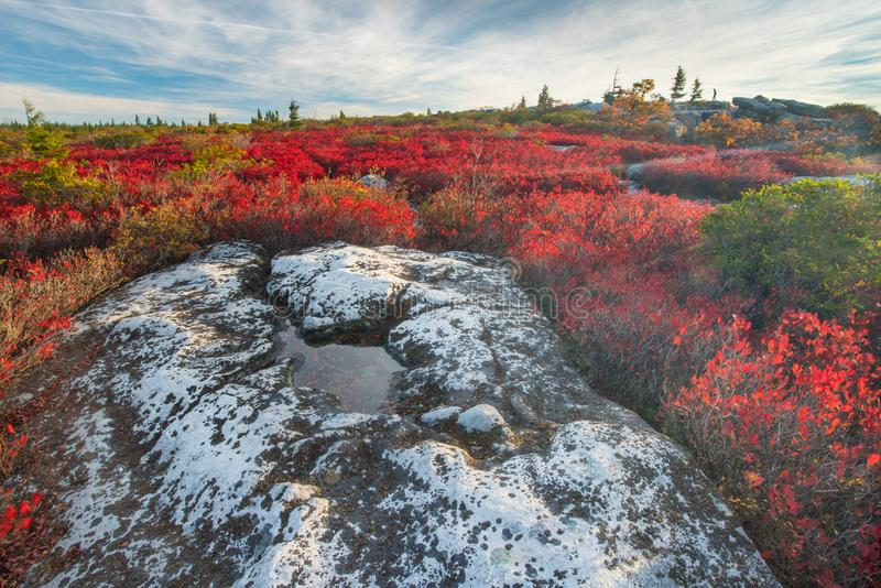Dolly Sods West Virginia royaltyfria bilder