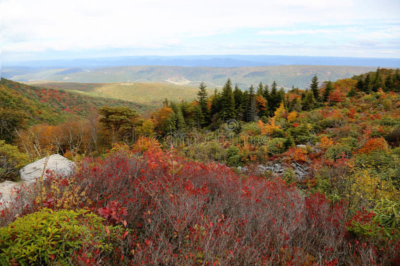 Dolly Sods West Virginia royalty-vrije stock afbeelding