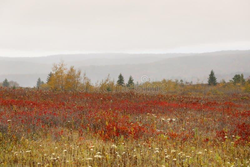 Dolly Sods West Virginia fotografering för bildbyråer