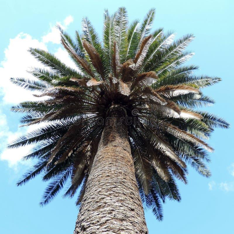 Dolny widok drzewko palmowe zdjęcie stock
