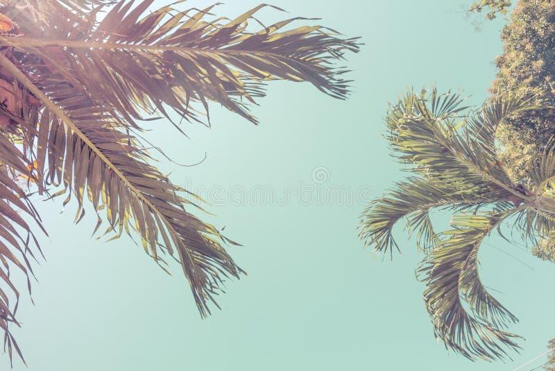 Dolny widok palmowi koron drzewa przeciw niebieskiemu niebu ? inematic retro lata tropikalny tło Puszyści palma liście obrazy stock