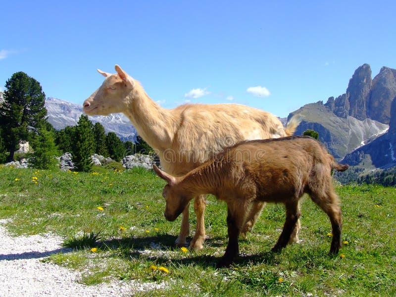 Download Dolomites stock photo. Image of europa, beautiful, background - 12701306