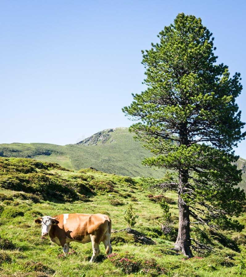 Download Dolomites stock image. Image of clear, range, animal - 29014539