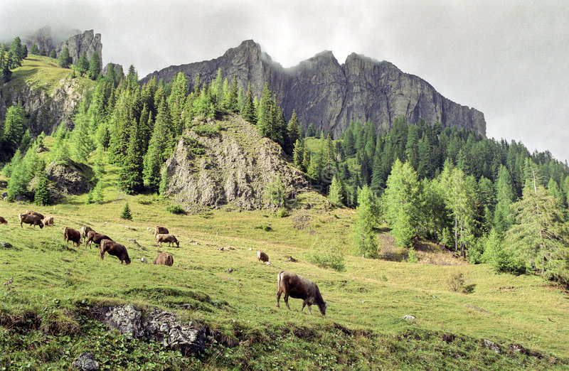 Dolomites foto de stock