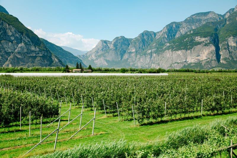 Dolomites Italian Alps Mountains. Vineyard field near mountains at daytime. Italy, Europe stock images