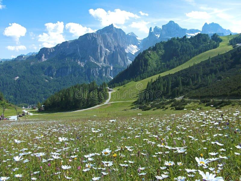 Dolomites Italie de ciel de montagne de maison de route de fleur images stock