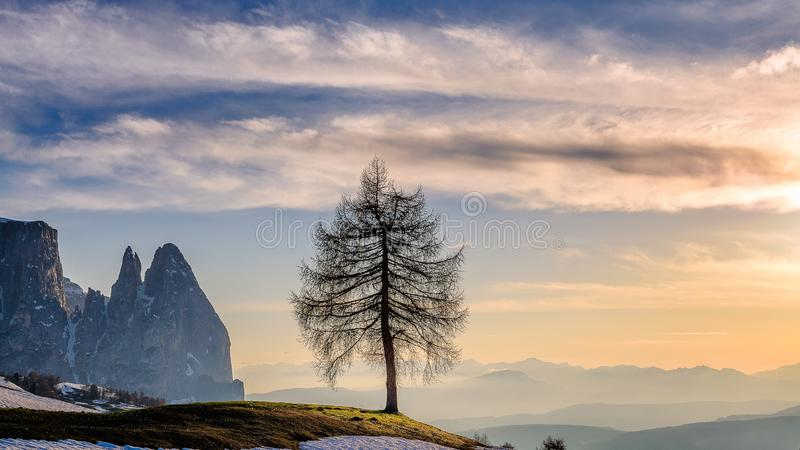 Dolomites. Landscape image of Seiser Alm a Dolomite plateau and the largest high-altitude Alpine meadow in Europe , lonely Tree royalty free stock photo