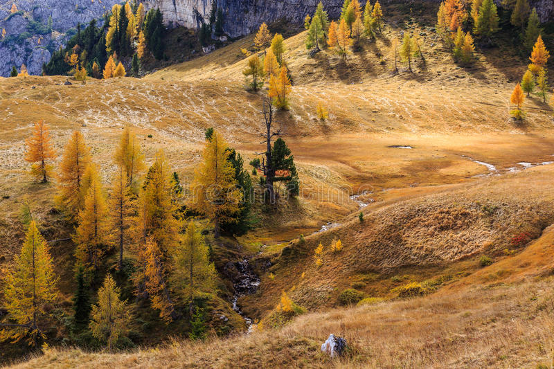 Trees on meadow at autumn in Dolomites royalty free stock images