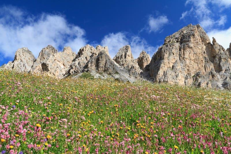 Dolomiti - kwitnąca łąka obrazy royalty free