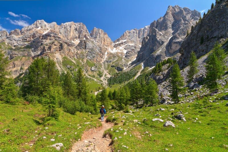 Dolomiti - landschap in Contrin stock foto's