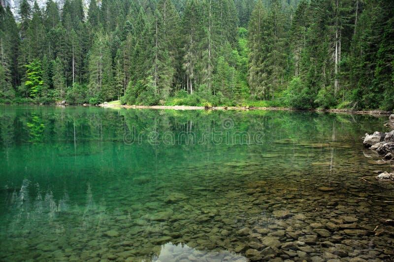Dolomiti mountain lake landscape2. Dolomiti mountain Tovel green lake landscape with tree trunks on the bottom royalty free stock photo