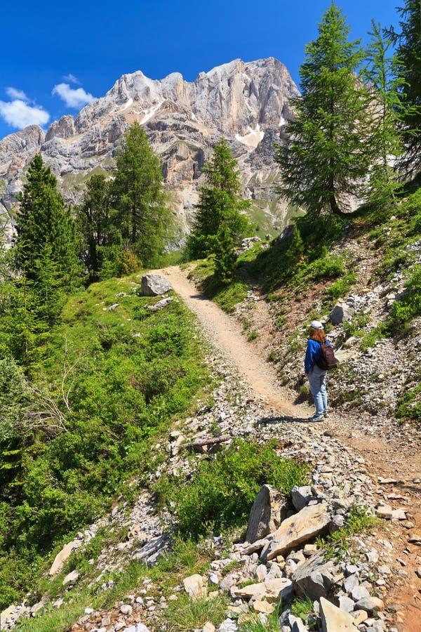 Dolomiti - wandelaar in Contrin-Vallei royalty-vrije stock foto