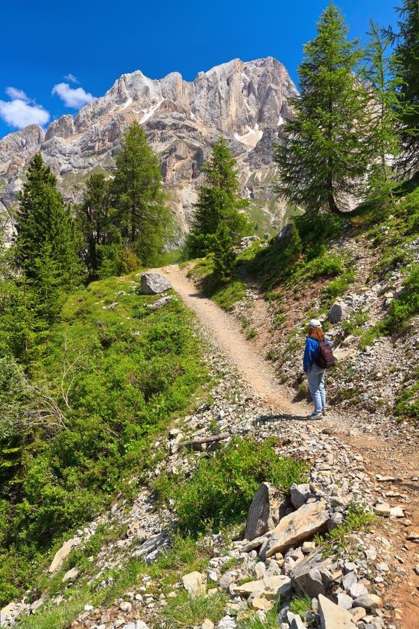 Dolomiti - wandelaar in Contrin-Vallei stock fotografie