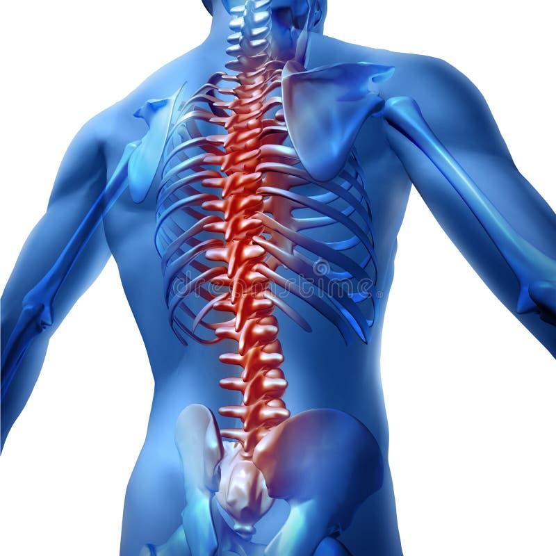 Dolor de espalda en cuerpo humano ilustración del vector