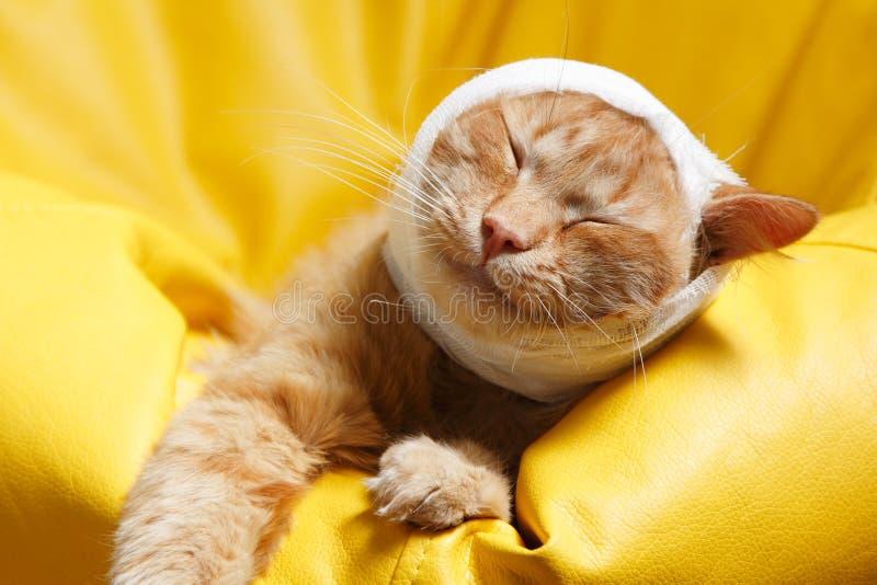 Dolore dell'orecchio di gatto con la fasciatura fotografia stock