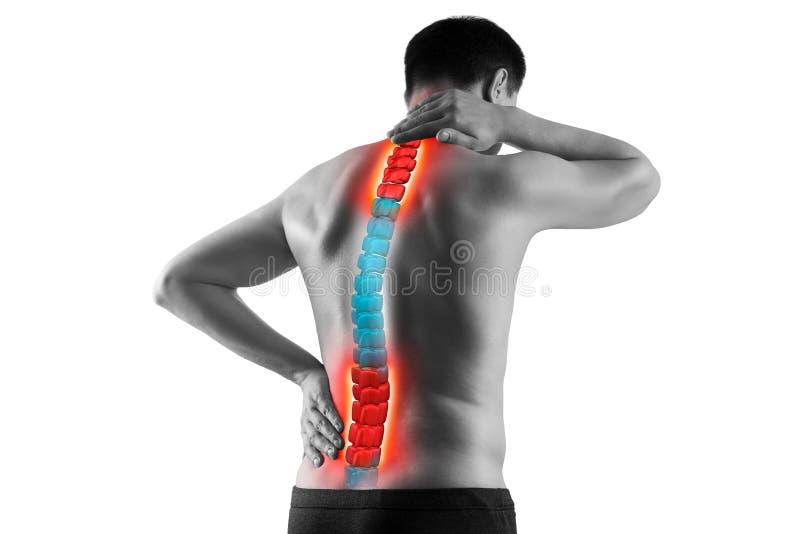 Dolore nella spina dorsale, in uomo con il mal di schiena, in sciatica e nella scoliosi isolati su fondo bianco, concetto di trat fotografia stock libera da diritti