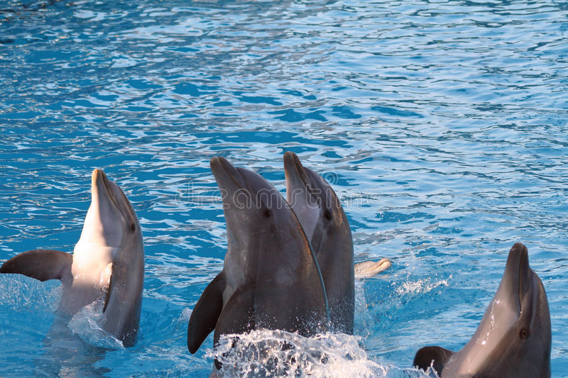 Download Dolphin Royalty Free Stock Image - Image: 1456146