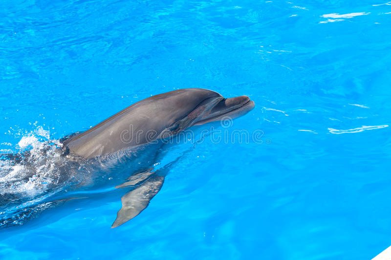Download Dolphin stock photo. Image of collage, pets, mammal, frame - 15793272