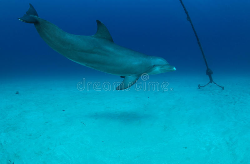 Download Dolphin stock image. Image of mammal, nose, water, delphinidae - 23565551