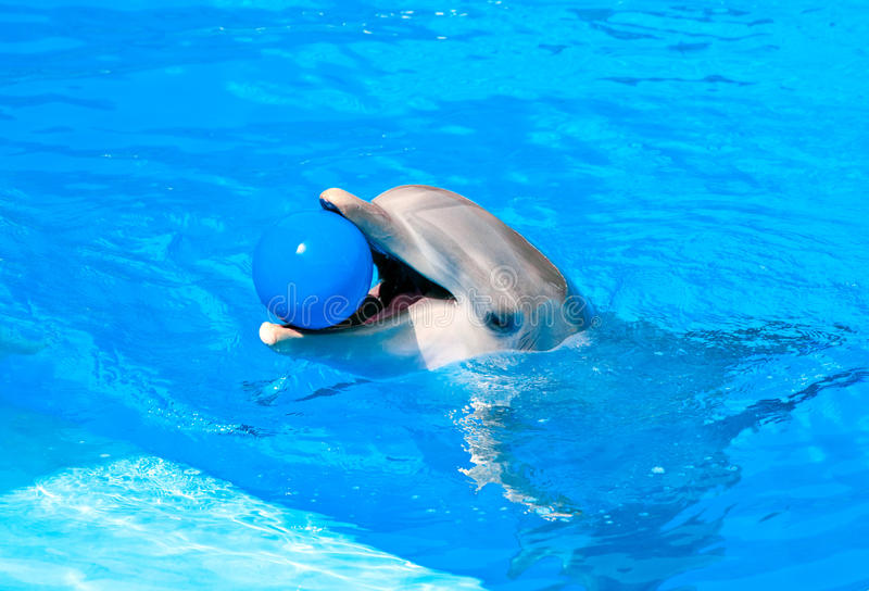 Download Dolphin stock image. Image of bottle, marine, life, pool - 23791193