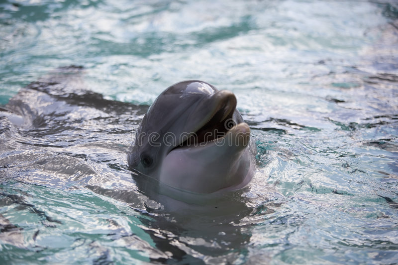 Download Dolphin Royalty Free Stock Photos - Image: 373968