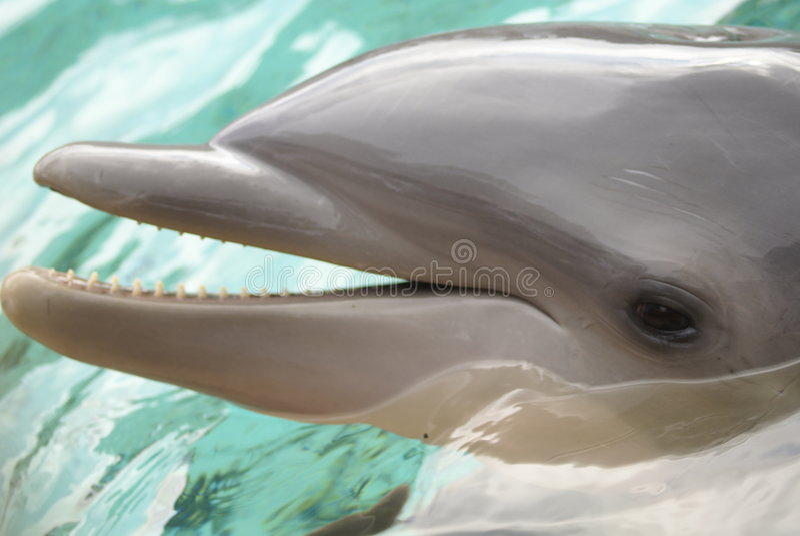 Download Dolphin stock photo. Image of smart, ocean, cute, splash - 3978706