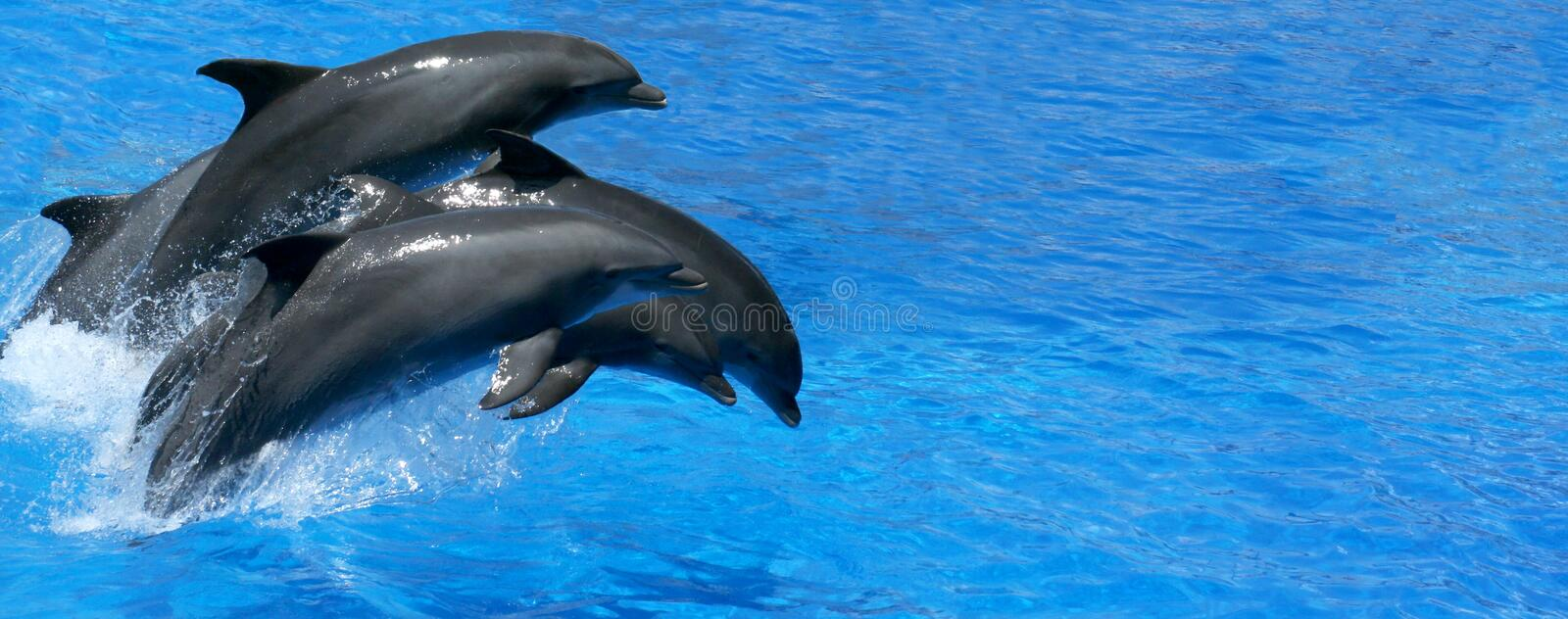 Dolphin. Jumps gayly in water