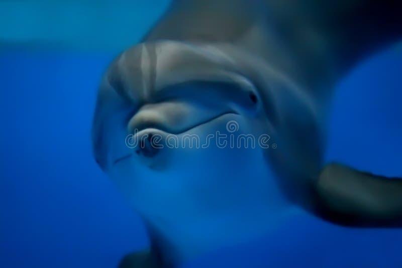 dolphin arkivfoton