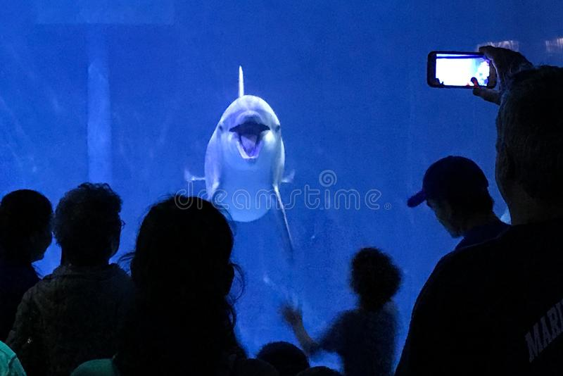 Dolphin at aquarium royalty free stock photos