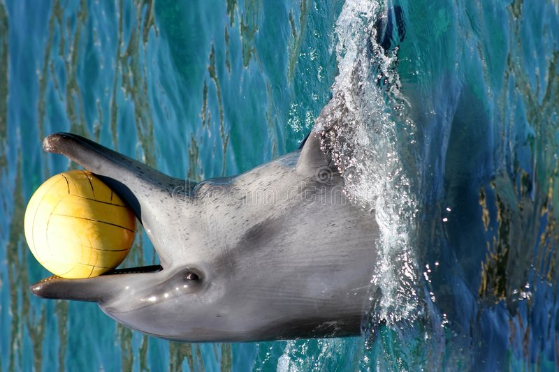 Dolphin and ball royalty free stock photo