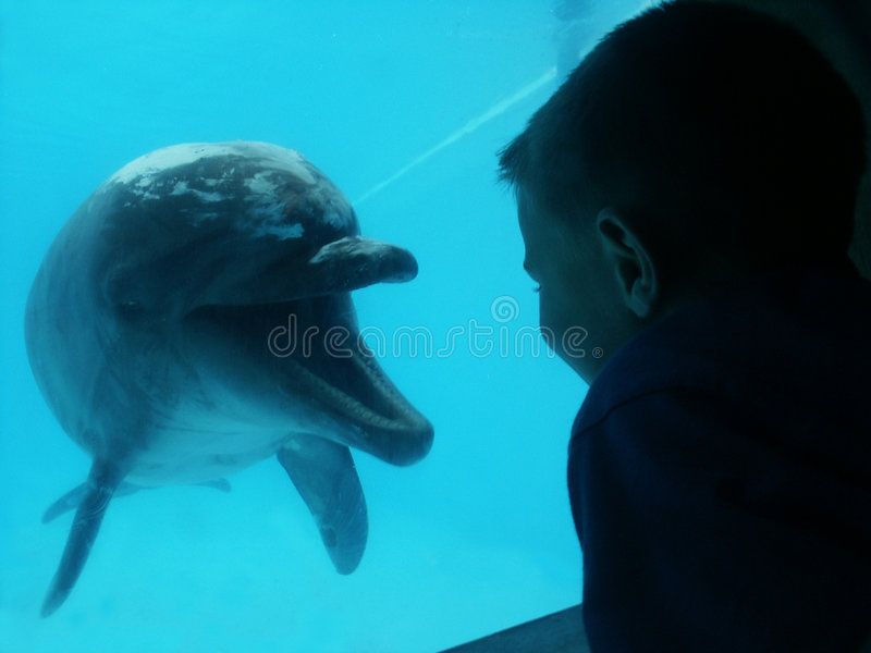 Dolphin and boy stock photo
