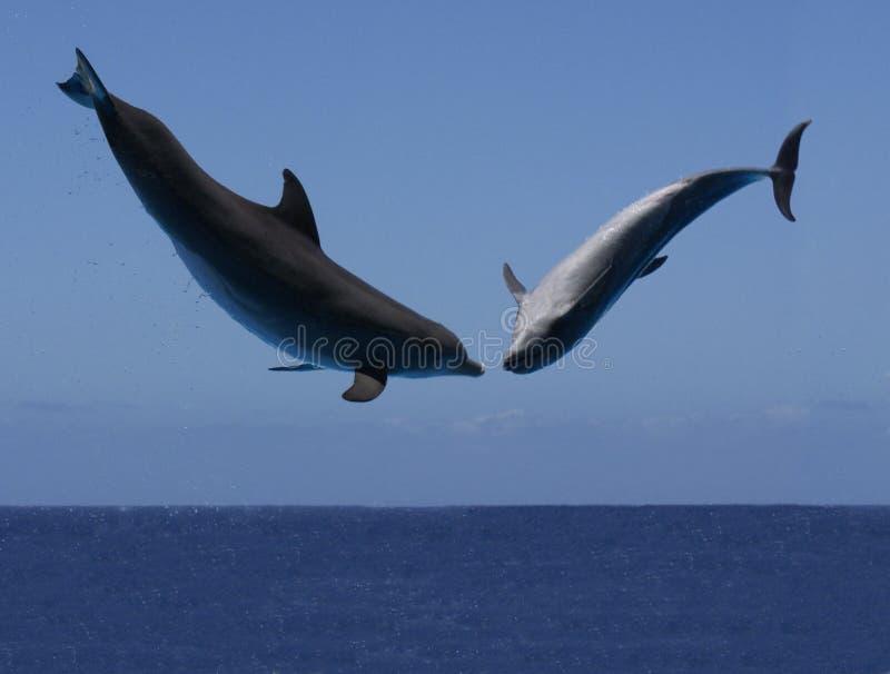 Dolphin Dance Stock Photos