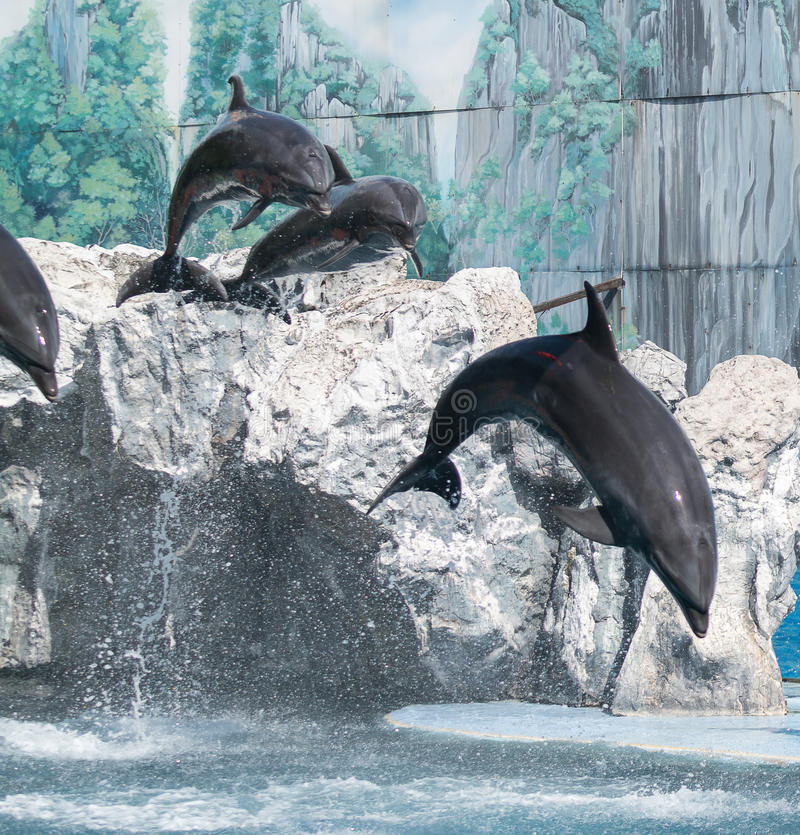 Dolphin. S are a widely distributed and diverse group of fully aquatic marine mammals. They are an informal grouping within the order Cetacea, excluding whales royalty free stock photography