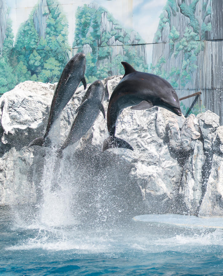 Dolphin. S are a widely distributed and diverse group of fully aquatic marine mammals. They are an informal grouping within the order Cetacea, excluding whales stock photography