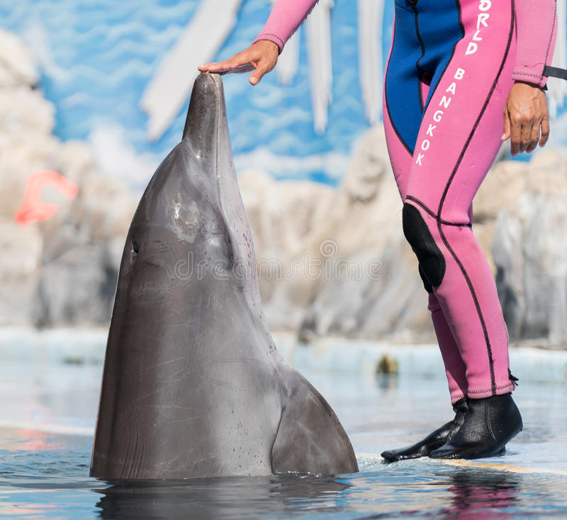 Dolphin. S are a widely distributed and diverse group of fully aquatic marine mammals. They are an informal grouping within the order Cetacea, excluding whales royalty free stock photos