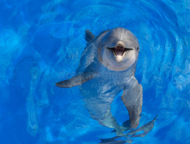 Dolphin face royalty free stock image