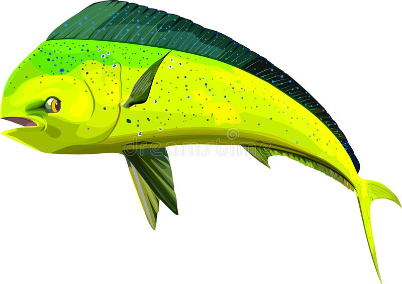 Dolphin fish stock illustration